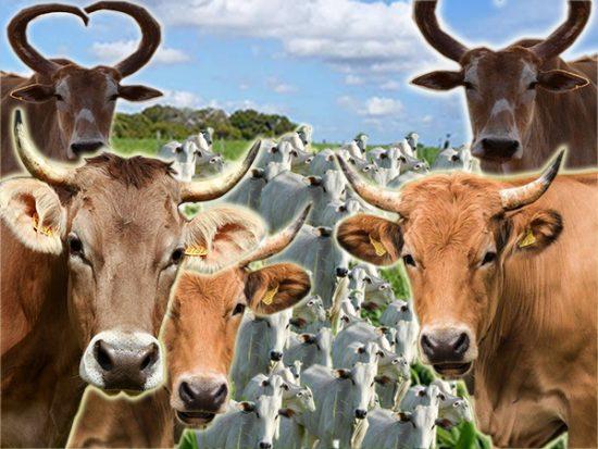 Número de cornos no Paraná cresceu 55% no mês de Outubro