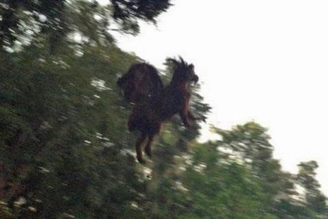 Cavalo Vingador amedronta pessoas na Feirinha Osório