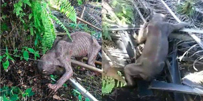 Suposto Cão-Diabo é encontrado morto em Curitiba