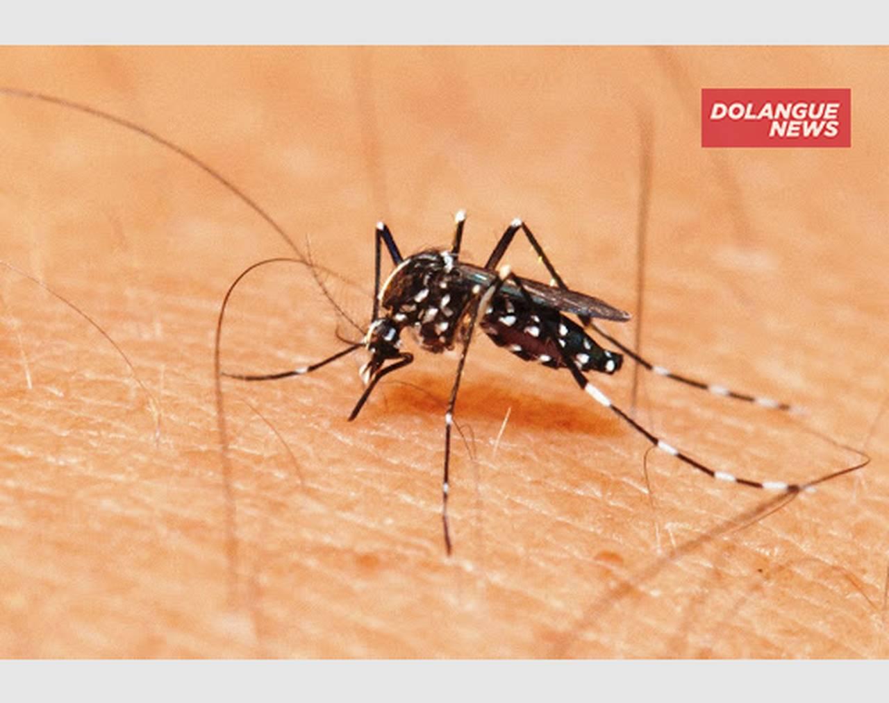 """""""Mosquito da Dengue estaria com ciúmes do Coronavírus"""", diz colunista"""