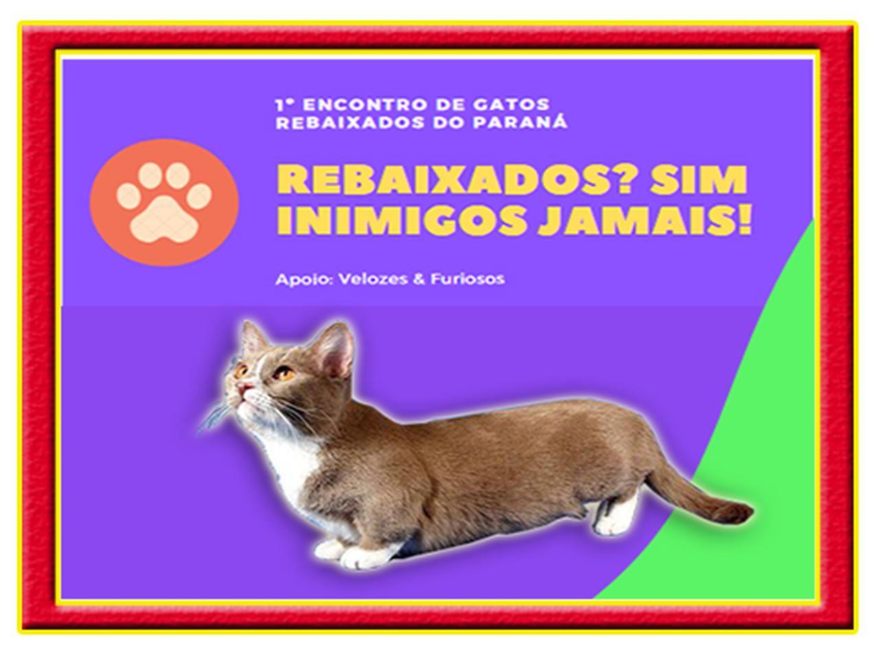 Curitiba recebe primeiro encontro de Gatos Rebaixados