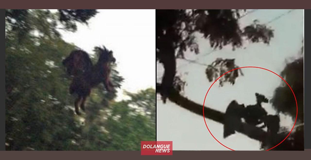 Em nova aparição, Cavalo Vingador causa pânico em Curitiba