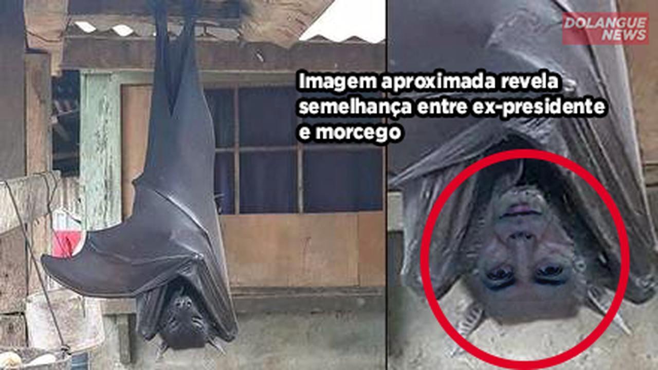 Morcego encontrado nas Filipinas seria filho de Michel Temer