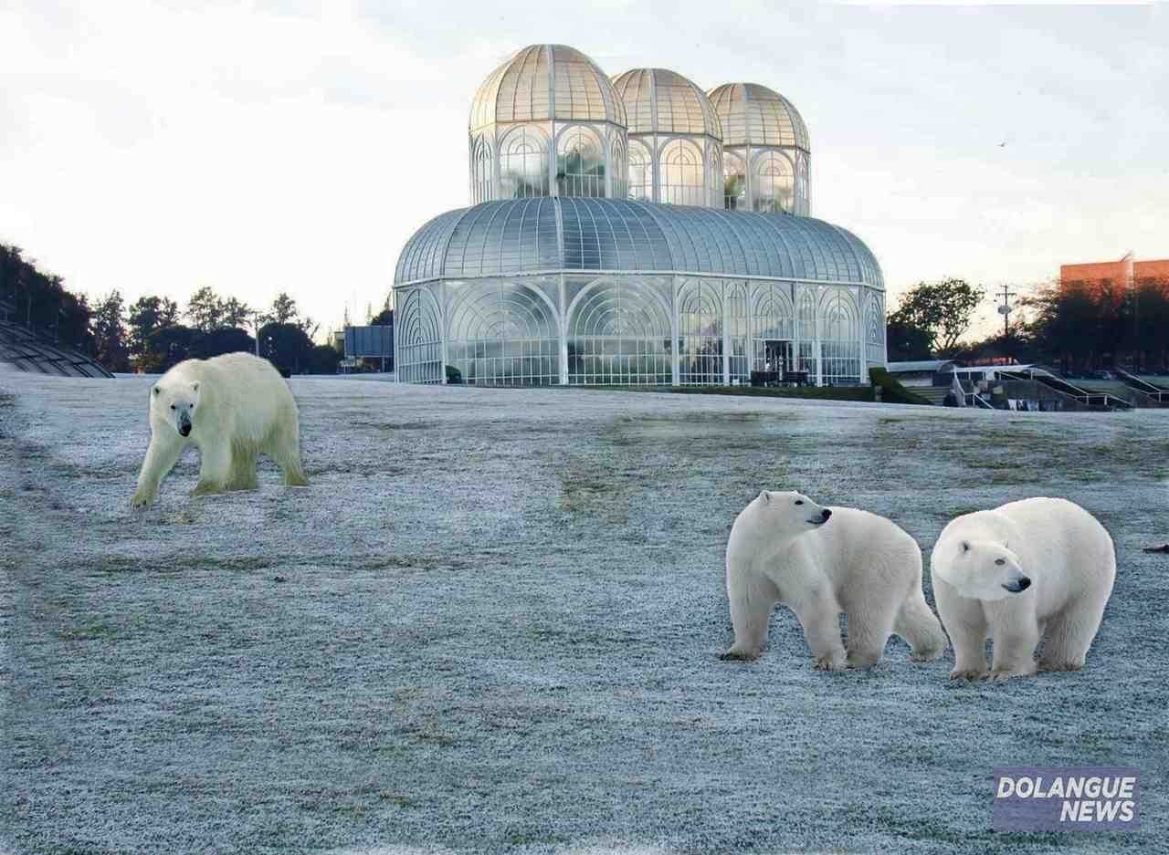 Ursos polares são flagrados no Jardim Botânico em Curitiba