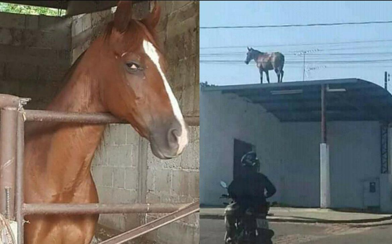 Desconfiado de seus donos, cavalo é flagrado em cima do telhado em busca de respostas